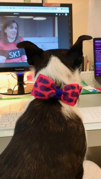 continued communication manager Jennifer Wetzel's dog